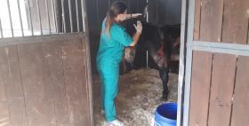 Asinelli ustionati in cura nell'Ospedale didattico veterinario Uniss_Battista_1