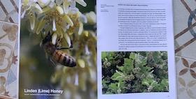 foto di un ape su un fiore con pagina di libro descrittiva a lato