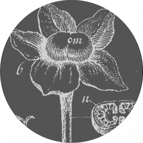 Botanica Generale